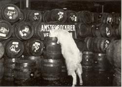 Gall&Gall Nijkerk organiseert Bockbierproeverij